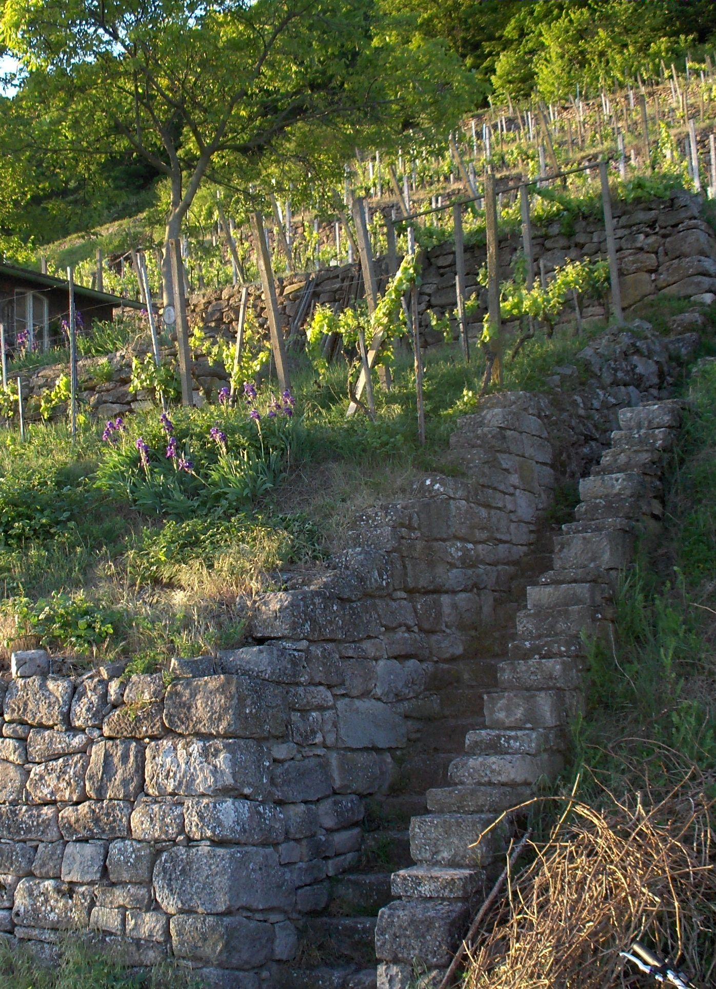 Steinbacher Nonnenberg